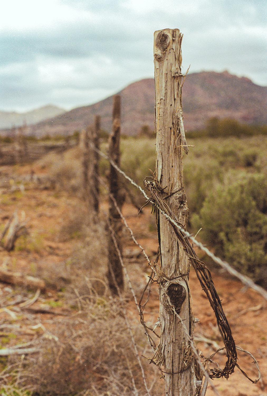 Travelt_barbed+wire-Edit-dcbryan_export-1500px
